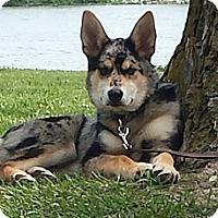 Adopt A Pet :: Zena - Council Bluffs, IA