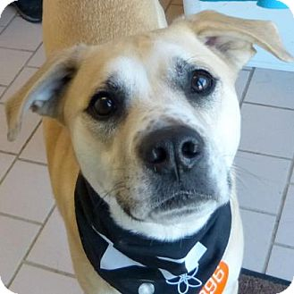 Retriever (Unknown Type) Mix Dog for adoption in Parma, Ohio - Domino