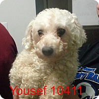 Adopt A Pet :: Yusef - Greencastle, NC
