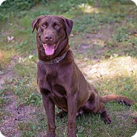 Adopt A Pet :: Justice - Lewisville, IN