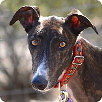 Adopt A Pet :: Valentine - Tucson, AZ