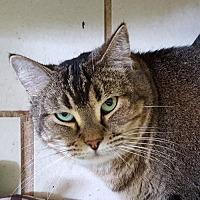 Adopt A Pet :: Sheyla - Lago Vista, TX