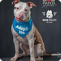 Adopt A Pet :: Elliot - Dayton, OH