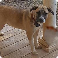Adopt A Pet :: PJ (55 lb) Big Cutie! - Niagara Falls, NY