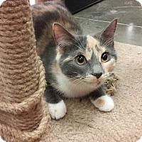 Adopt A Pet :: Calcie - Richmond, VA