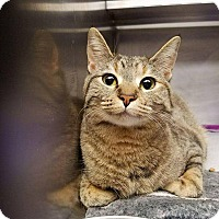 Adopt A Pet :: Pearl - LaGrange Park, IL
