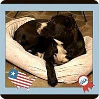 Adopt A Pet :: Louis - Rancho Cucamonga, CA