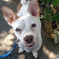 Adopt A Pet :: Skip - Encino, CA