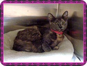 Domestic Shorthair Cat for adoption in Marietta, Georgia - JENNA