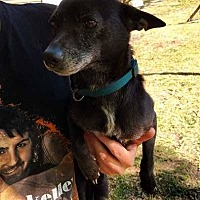 Adopt A Pet :: Chico - Augusta, GA
