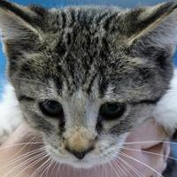Adopt A Pet :: Charlie - Robinson, IL