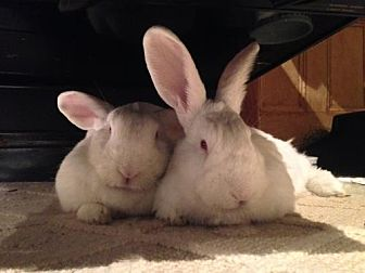 New Zealand for adoption in Holbrook, New York - Chloe and Portia
