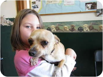Chihuahua Mix Dog for adoption in Lexington, Kentucky - Marco