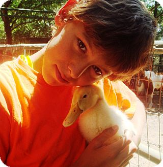 Duck for adoption in El Cajon, California - Mr. Quackers