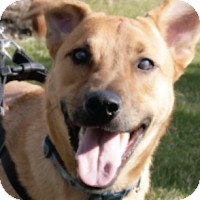 Hound (Unknown Type)/Shepherd (Unknown Type) Mix Dog for adoption in Freehold, New Jersey - Frankie