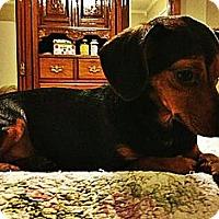 Adopt A Pet :: Daisy - Silsbee, TX