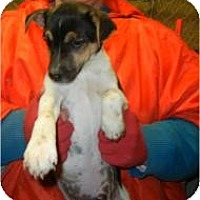 Adopt A Pet :: Allegro ADOPTED!! - Antioch, IL