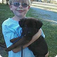 Adopt A Pet :: Emma Webb - Southampton, PA