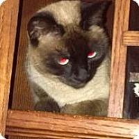 Adopt A Pet :: Miss Meezer - Modesto, CA