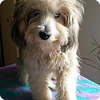 Adopt A Pet :: Gracie - Playa Del Rey, CA