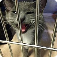 Adopt A Pet :: Fido - Byron Center, MI