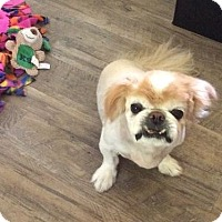 Adopt A Pet :: Chewy (in NC) - Portland, ME