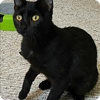 Adopt A Pet :: Katie - Mount Clemens, MI