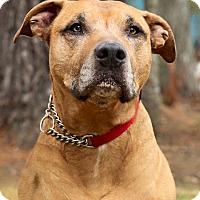 Adopt A Pet :: Buddy - Acushnet, MA