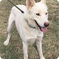Adopt A Pet :: Leggo ~ ADOPTED! - Saratoga Springs, NY
