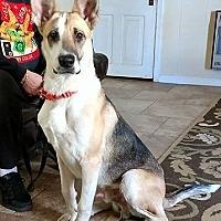 Adopt A Pet :: Jester - Montgomery, AL