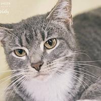 Adopt A Pet :: Holly - Webster, TX