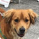 Adopt A Pet :: Granger