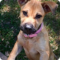 Adopt A Pet :: Greta - West Hartford, CT