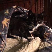 Adopt A Pet :: Jericho - Delmont, PA