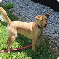Adopt A Pet :: BETTY - LaGrange, KY