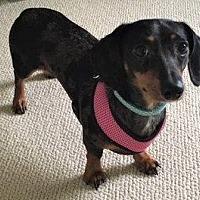 Adopt A Pet :: Sophie-Pending Adoption - Omaha, NE