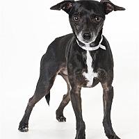 Adopt A Pet :: Milo - Monterey, CA