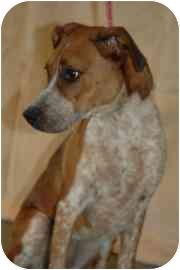 Hound (Unknown Type) Mix Dog for adoption in Walker, Michigan - Fiona