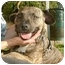 Photo 2 - American Pit Bull Terrier Mix Dog for adoption in Berkeley, California - Autumn
