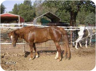Pony - Other for adoption in Cottonwood, California - Taffy