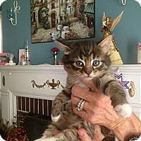 Adopt A Pet :: Oscar - Tarboro, NC