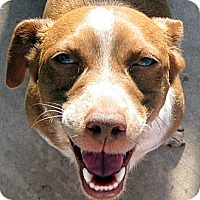 Adopt A Pet :: Quincy - Oakley, CA