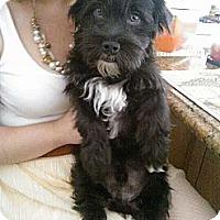 Adopt A Pet :: Rocky - San Dimas, CA