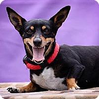 Adopt A Pet :: Mona - Poway, CA