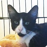 Adopt A Pet :: Freedom - Irvine, CA