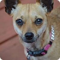 Adopt A Pet :: Eva - Wimberley, TX