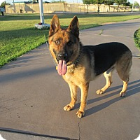 Adopt A Pet :: Horst von Heidelberg - Phoenix, AZ
