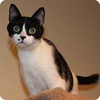 Adopt A Pet :: Marilyn - Merrifield, VA