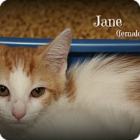 Adopt A Pet :: Jane - Springfield, PA