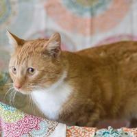 Adopt A Pet :: Samuel - Davenport, IA